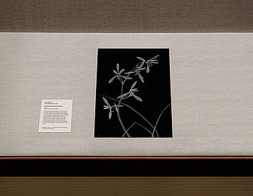 Thilo Westermann Chinese Orchid Homage Ma Lin Metropolitan Museum of Art New York Photoart Ensemble